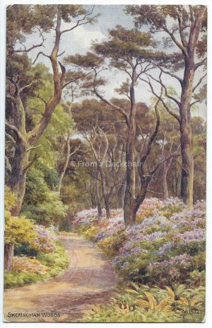 Sherringham Woods Vintage Postcard
