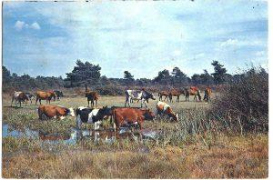 New Forest Hampshire Vintage Postcard